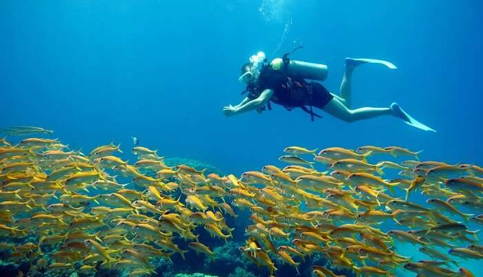 Scuba Diving In Maafushi: Plunge Into The Mystical World Of The Sea And Beyond!