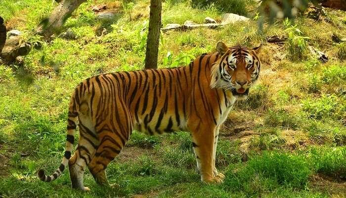 Ushakothi Wildlife Sanctuary