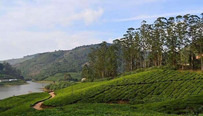 Meghamalai plantations