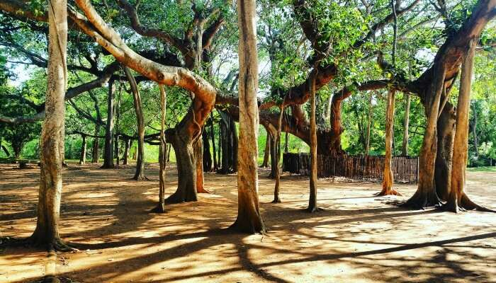 auroville is the best