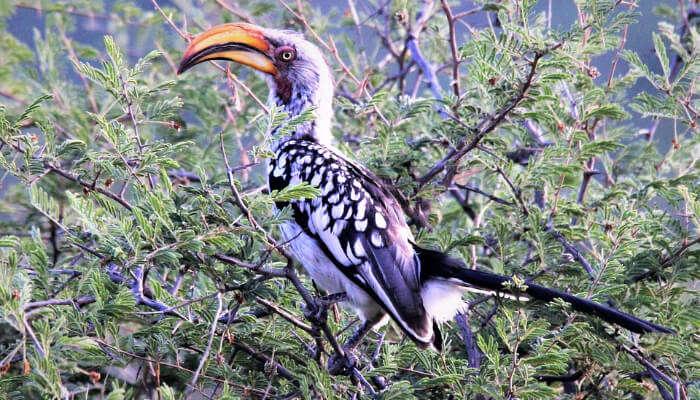 Bhimgad Wildlife Sanctuary