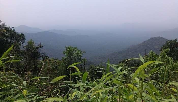 Gaze At Scenic Views