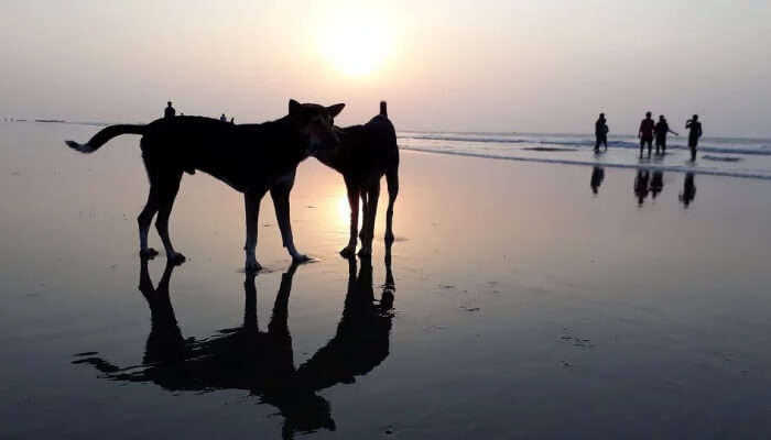 Digha is also best trip to Bhubaneswar