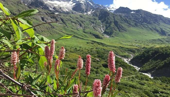 Hemkund And Valley of Flowers