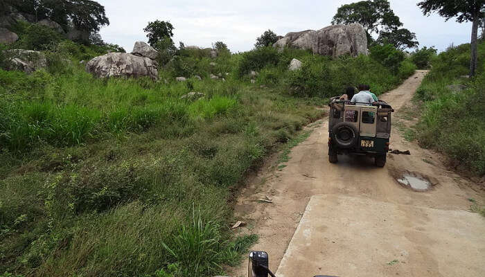 A Jeep Safari in a National Park