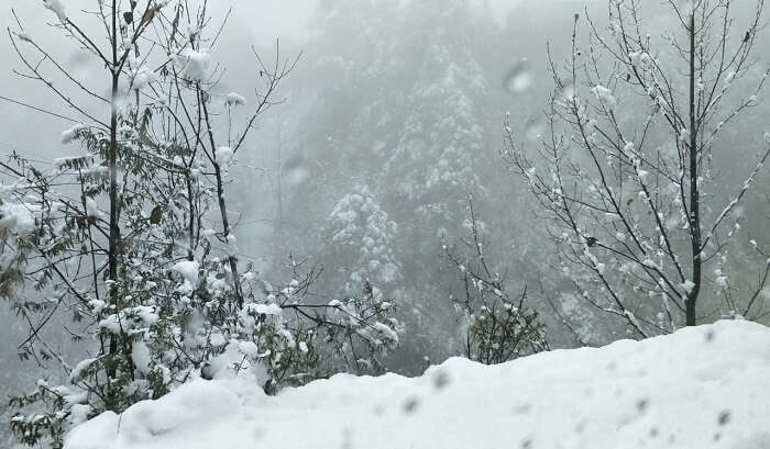 had witnessed the snowfall in Sikkim