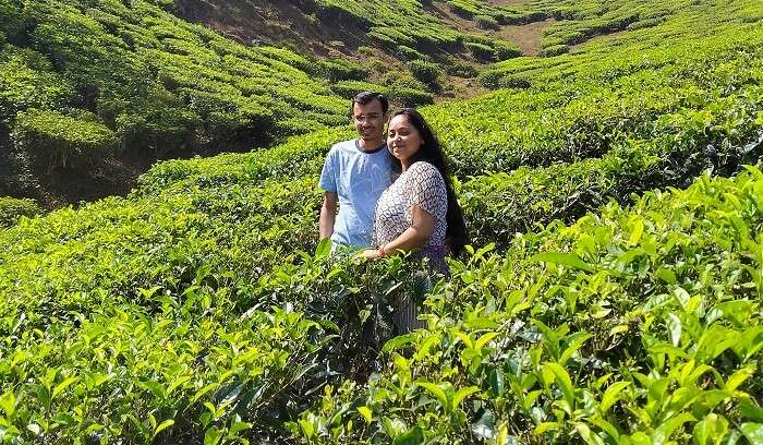 in the mid of tea plantations