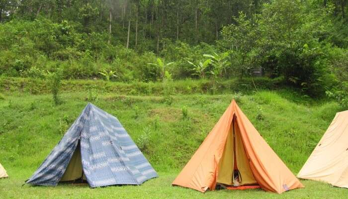 Jungle Camping is the best activity