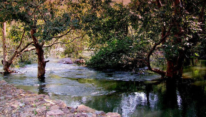 Sita Mata Wildlife Sanctuary View