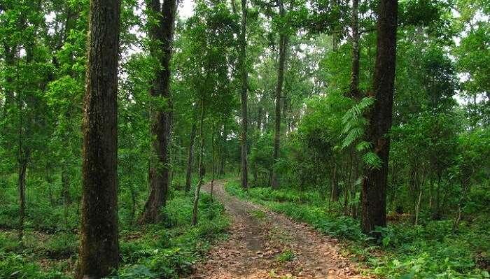 gorumara location