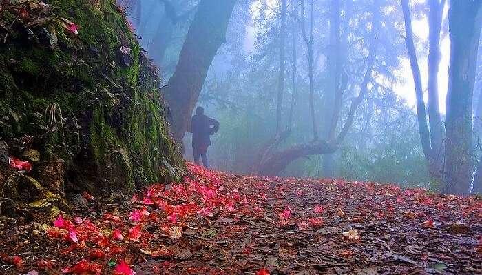 nature trails