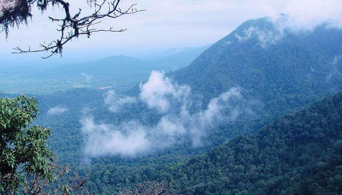 Jungle View Of Agumbe