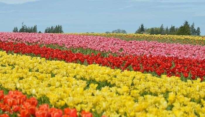 Flower Valley