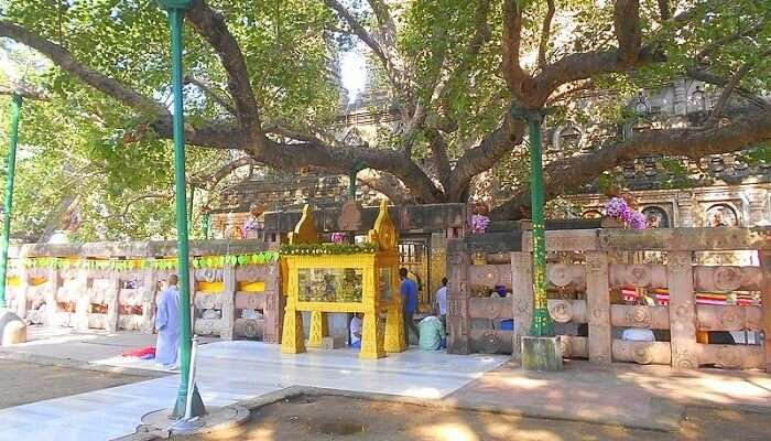 entrance and timings for mahabodhi temple