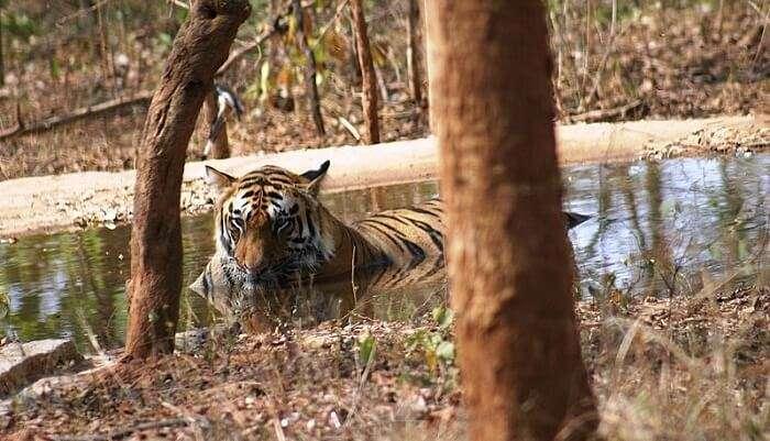 Bandhavgarh Tiger Reserve