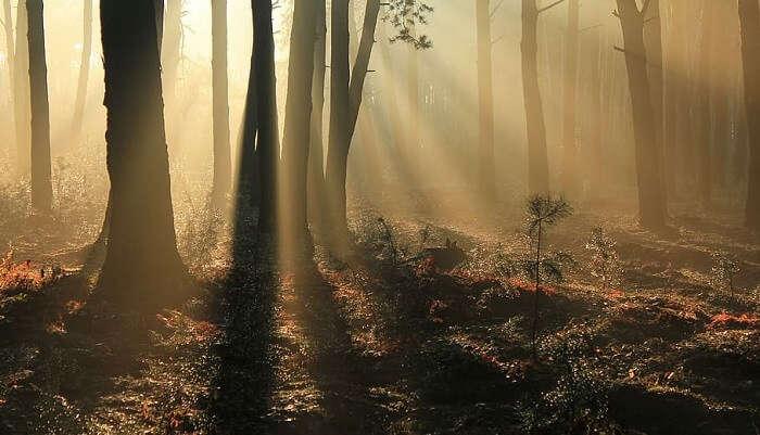 Brahmaputra Valley Semi-Evergreen Forests
