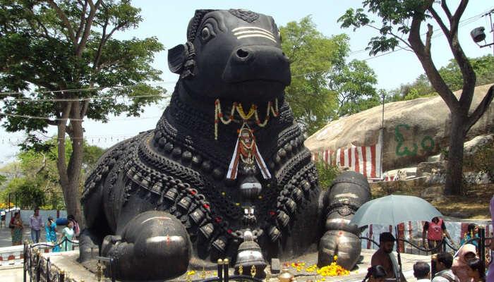 Nandi Bull in India