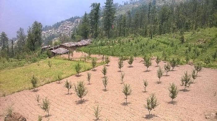 Mori In Uttarakhand