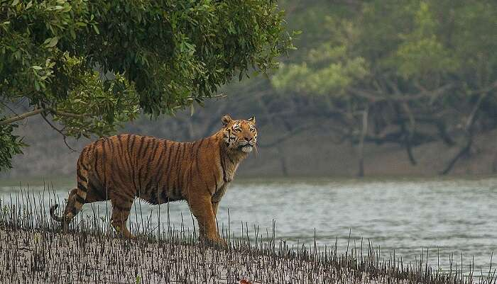 charming tiger reserve in West Bengal