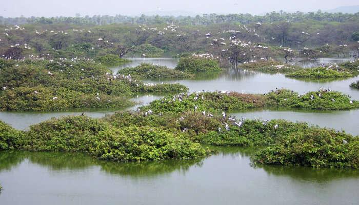 Birds In Vedanthangal Bird Sanctuary