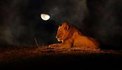 MP Night Safaris